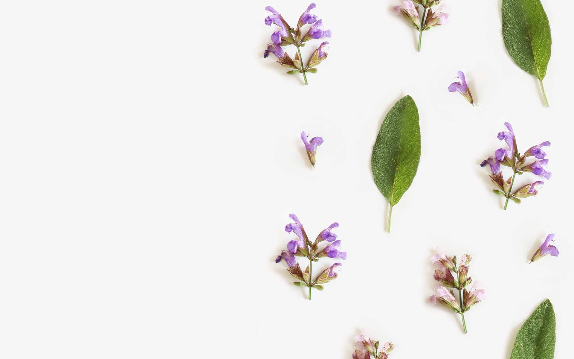 Salbeiblütenblätter